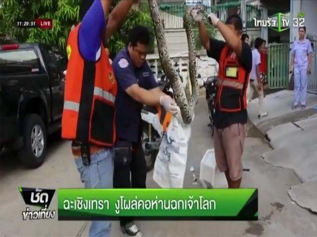 питон вылез из унитаза и схватил за половой орган мужчину в Таиланде