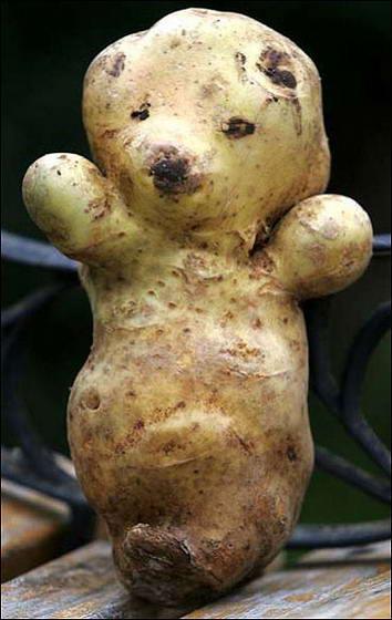 Картофель, который жалко жарить