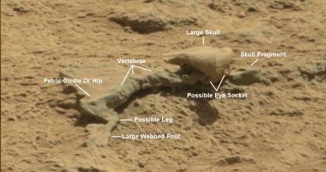 Уфологи показали навидео марсианские находки искелеты