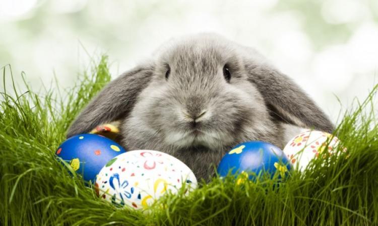 Почему кролик несет яйца