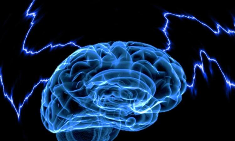 Оживить мозг мертвого человека намерены американские ученые