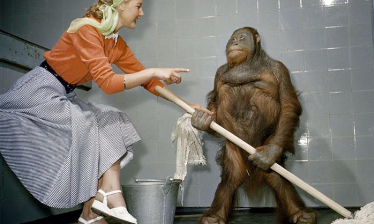 В национальном парке в Борнео орангутанг использовал мыло на глазах...