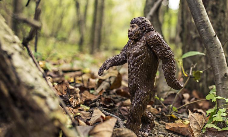 Находка на Алтае теория происхождения человека