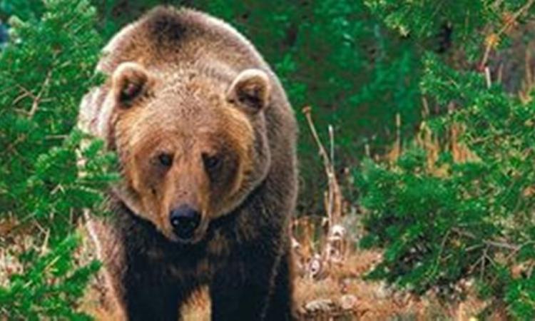 Мурманские туристы напугали медведя песней про трын-траву