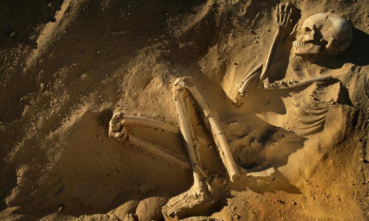 Надетской площадке в Великобритании найден скелет человека