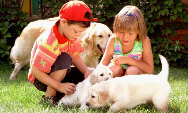 Домашние питомцы снижают риск астмы у детей