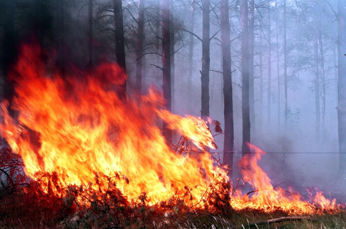 Картинки лес пожары