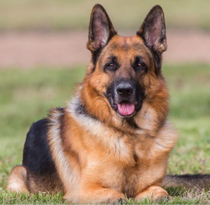 рейтинг пяти популярных пород собак