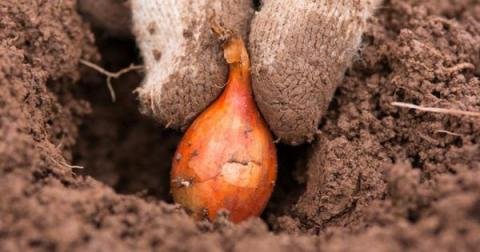 """Работы на огороде в апреле – посев овощей в открытый грунт, посадка лука-севка и ярового чеснока и не только"""""""
