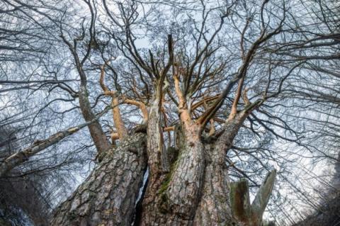 В Астрахани появилось глазастое дерево