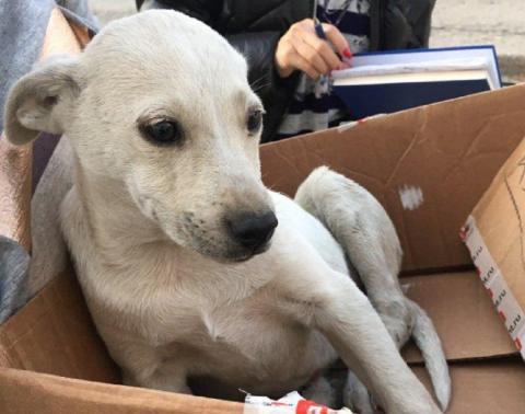 В Симферополе водителя сурово наказали за сбитую собаку