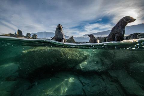 Уникальные фото из Антарктиды