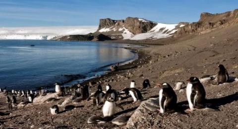 остров Ливингстон Южных Шетландских островов Антарктиды фото