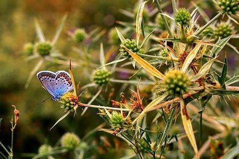Голубая бабочка в траве