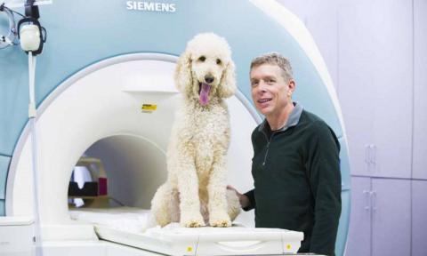 Эксперимент выявил способность собак считать в уме