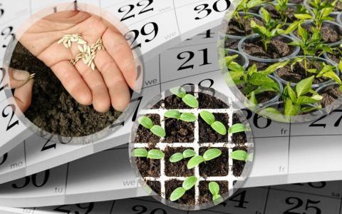 Огород на подоконнике в марте