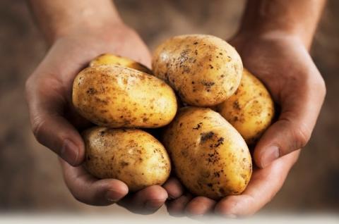 Блюдо из картофеля, которое наносит непоправимый вред здоровью, назвали ученые