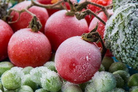 Как правильно заморозить помидоры на зиму в домашних условиях
