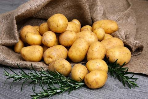 Морозостойкий непортящийся картофель вывели российские ученые