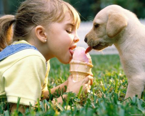 Кинолог рассказал о тонкостях отношений между собакой и ребенком