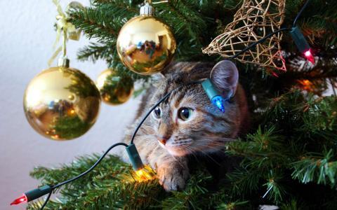 кошка на елке