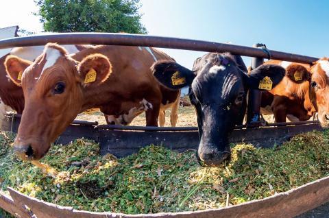 В КубГАУ могут открыть центр развития животноводства