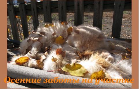 Осень на усадьбе