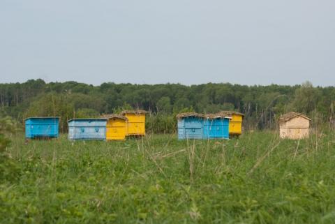 Пчеловоды могут исчезнуть в Ростове
