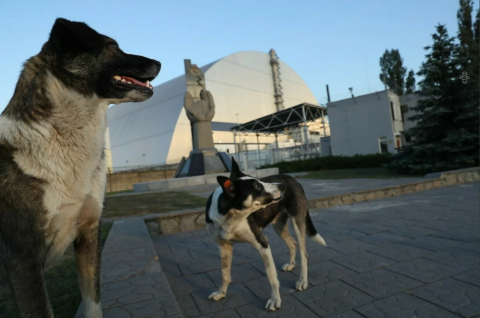 Боль Чернобыля, о которой принято молчать: живой «привет» из прошлого зоны отчуждения
