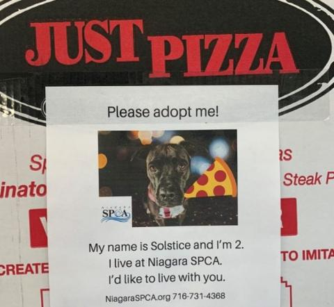 Путь к сердцу – через желудок: приют для животных пристраивает собак и кошек с помощью пиццы