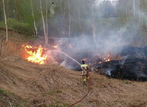 В Ростове крупный пожар: горит Кумженская роща
