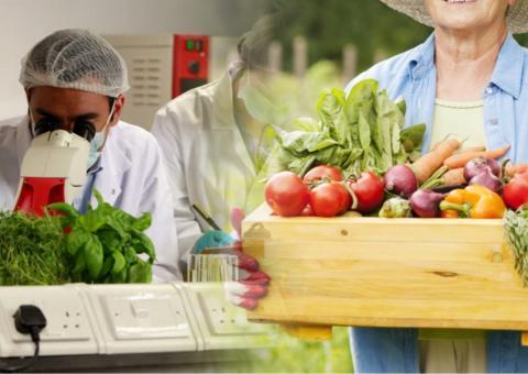 Проверка продуктов с огорода