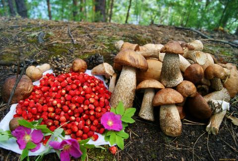грибы ягоды лес