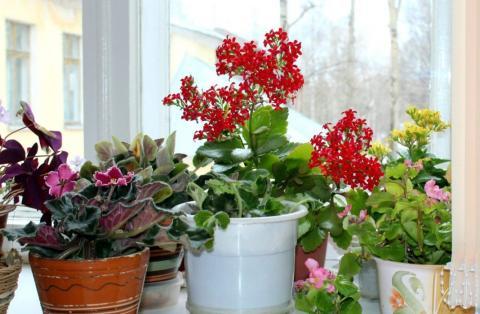Комнатные цветы в ноябре