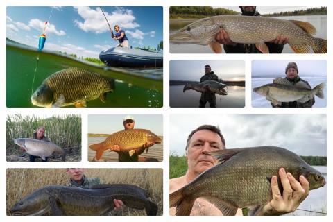 Самые крупные рыбы пойманные в России