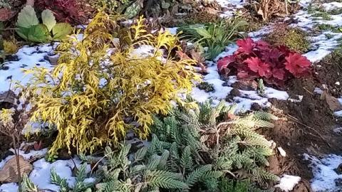 Уход за цветами в ноябре