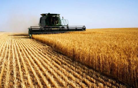 Минсельхоз: Россия самостоятельно обеспечивает себя продовольственными товарами