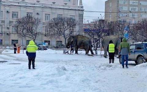 Слоны на улицах Екатеринбурга