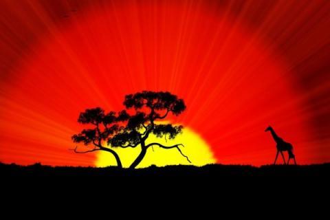 Кто вы по африканскому гороскопу