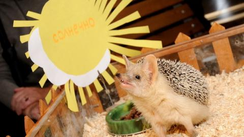 Ежи-предсказатели из Челябинска прогнозируют теплую весну и урожайное лето