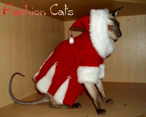 Самые модные породы кошек 2017