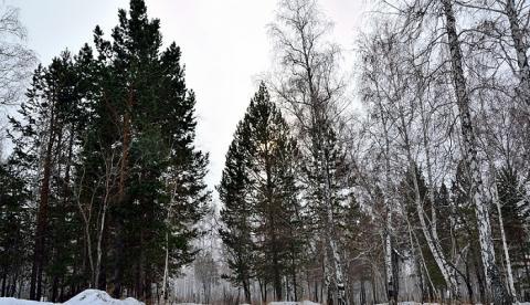 Наталья Маламед, новости 4 02 2017