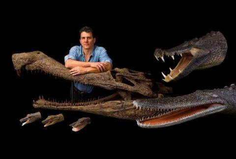 Крокодилоподобные рептилии являются предками человека - новая теория эволюции выдвинута учеными