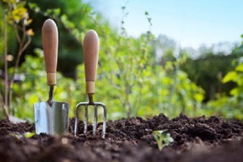 Лунный посевной календарь на 2017 год: запрещенные и благоприятные дни для посева семян и пересадки растений по числам