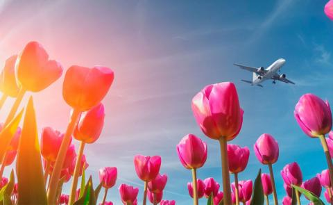 Как отдыхаем на майские праздники 2019