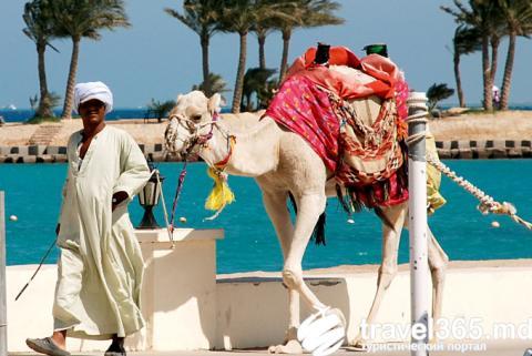 Отдых в Египте существенно подорожает – сообщили туроператоры