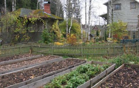 Октябрь, работы в огороде