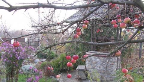 Октябрь, работы в саду