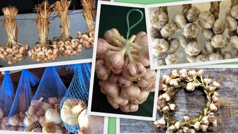 Как правильно хранить лук и чеснок на зиму в домашних условиях: простые способы хранения чеснока и лука