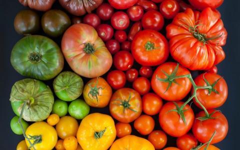 Необходимая натуральная подкормка для томатов в июле и августе: секрет продления плодоношения помидоров